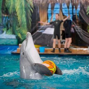 Дельфинарии, океанариумы Северска