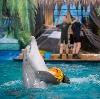 Дельфинарии, океанариумы в Северске